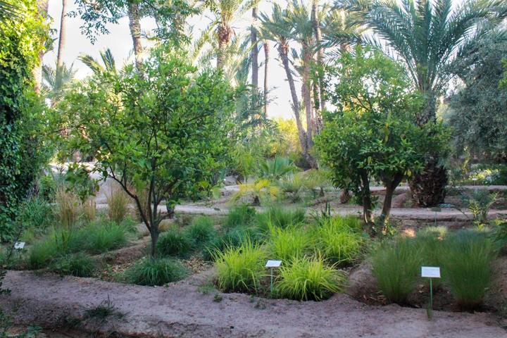 Jardines Botánicos de Marrakech
